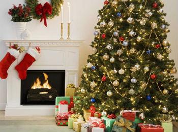 Середня вартість новорічної красуні - 250 гривень