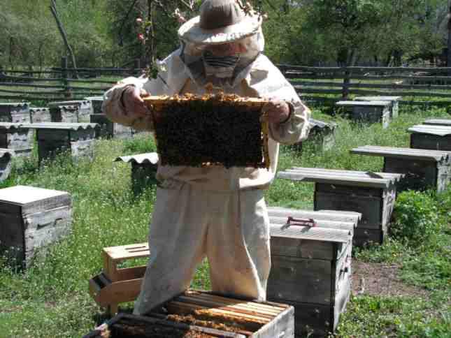 МинАгро: Пчеловодов ожидают изменения в производстве продукции