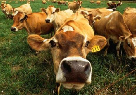 Українські аграрії публічно висловились у підтримку євроінтеграції