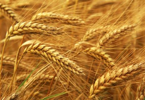 Від експортерів зерна вимагають додаткову