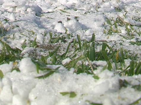 Морози забрали в українських аграріїв 7 млрд. гривень