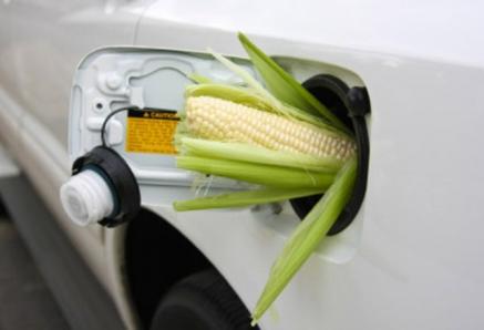 Биотопливо может вызвать продовольственный кризис